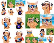 眼镜可爱猫摄影高清图片