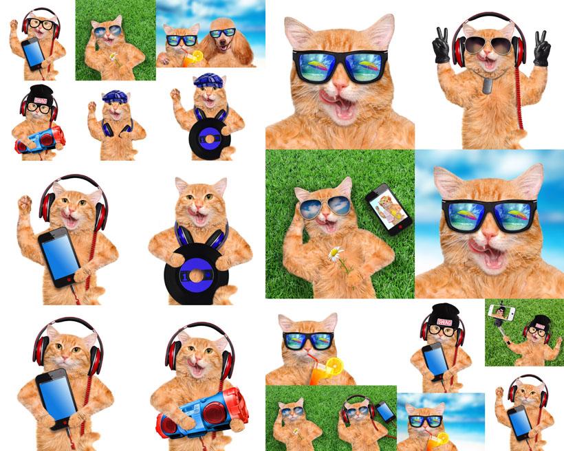 眼镜可爱猫摄影时时彩娱乐网站