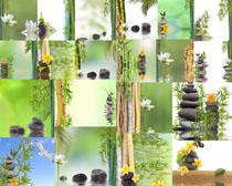 石头竹子花朵摄影高清图片