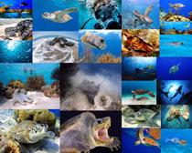 海底大海龟摄影高清图片
