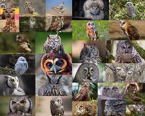猫头鹰摄影高清图片
