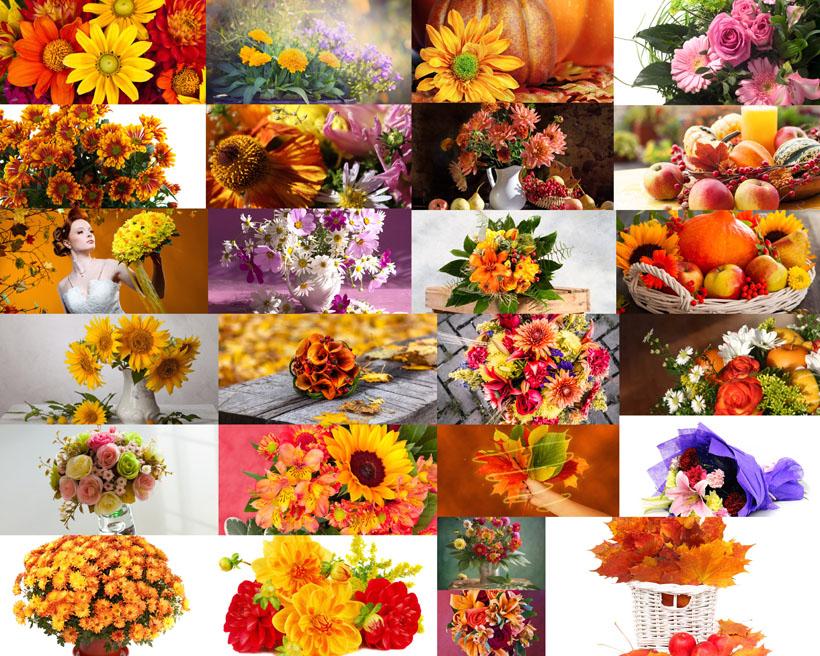 秋天美丽花朵摄影高清图片