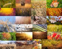 稻草馬尾草風景攝影高清圖片
