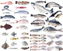 各式海魚攝影高清圖片