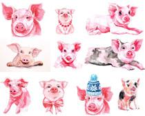 水彩绘画可爱猪摄影时时彩娱乐网站