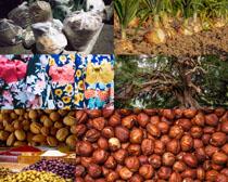 国外干果食物摄影高清图片