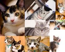 可愛貓咪寫真攝影高清圖片