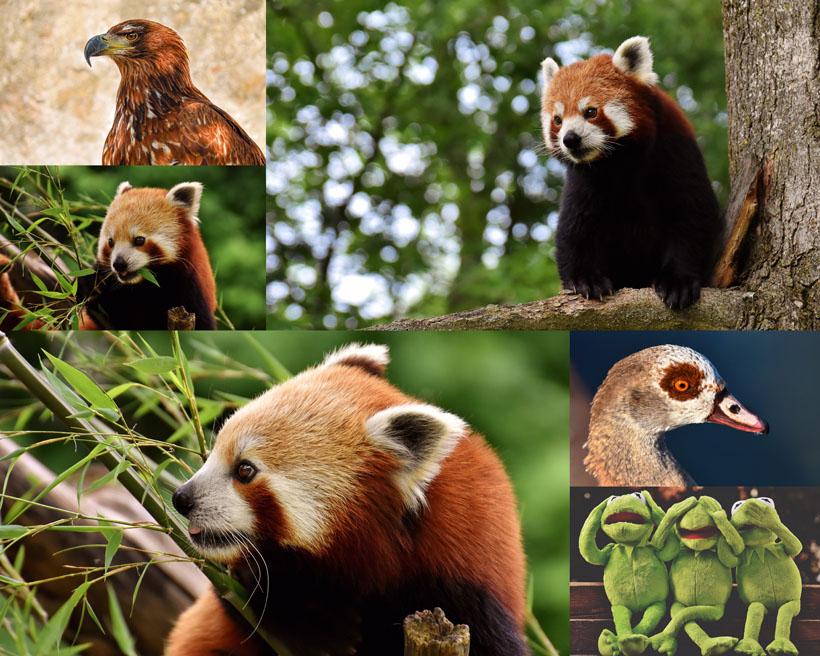 森林动物拍摄时时彩娱乐网站