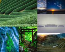 美丽的茶叶风景摄影高清图片
