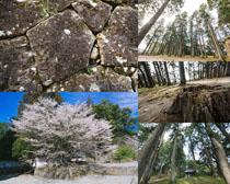 樹木花朵石頭風景攝影高清圖片