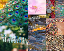 石子羽毛鱼自然摄影高清图片