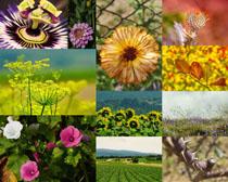 春天节气花朵摄影高清图片