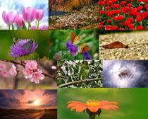 春天花朵自然风景摄影高清图片