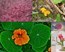 春天植物攝(she)影高清圖片