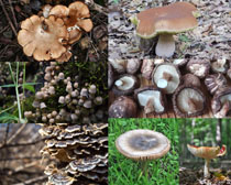 植物蘑菇攝影高清圖片