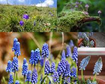 草与花朵摄影高清图片
