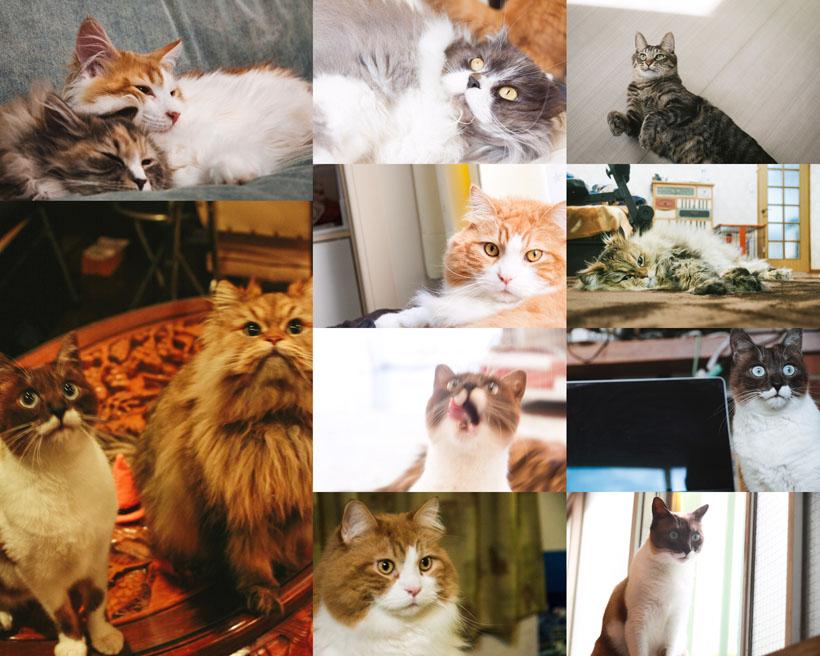 可爱类型猫咪摄影时时彩娱乐网站