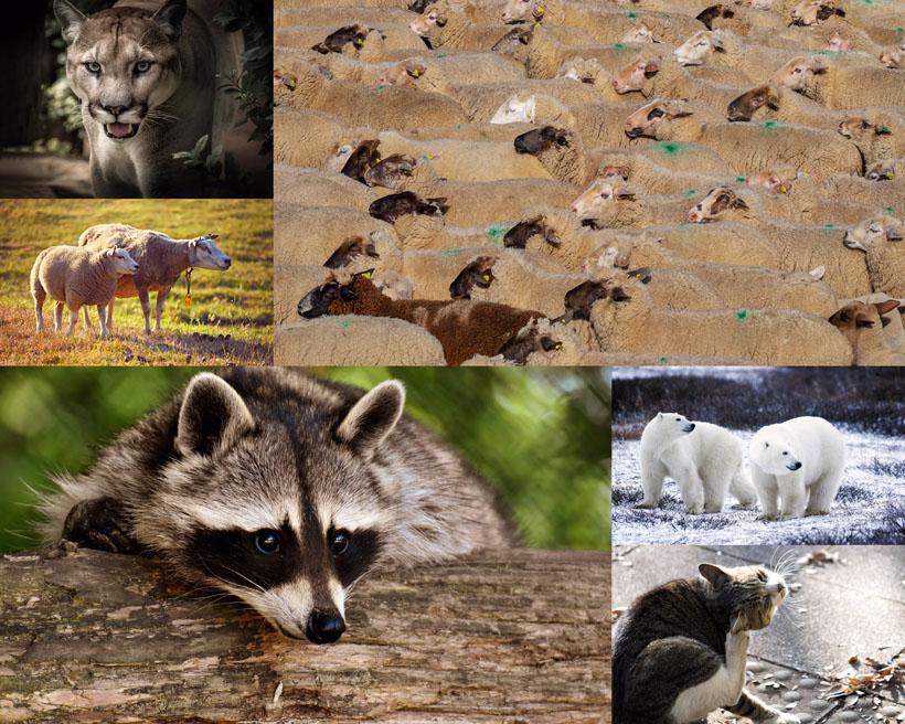 动物特写拍摄时时彩娱乐网站