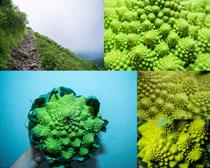 绿色植物拍摄高清图片