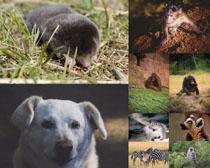可愛動物寫真拍攝高清圖片