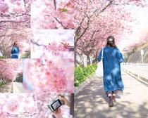 美丽的樱花摄影高清图片
