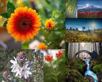 美丽的春天花朵拍摄高清图片