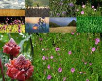 春天美丽花朵拍摄高清图片