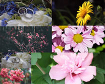 美麗花朵與戒子攝影高清圖片