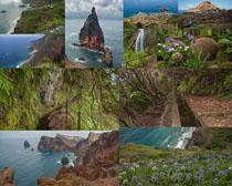 大海与植物风光摄影高清图片