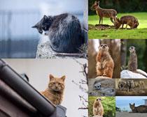 可爱小动物写真拍摄高清图片