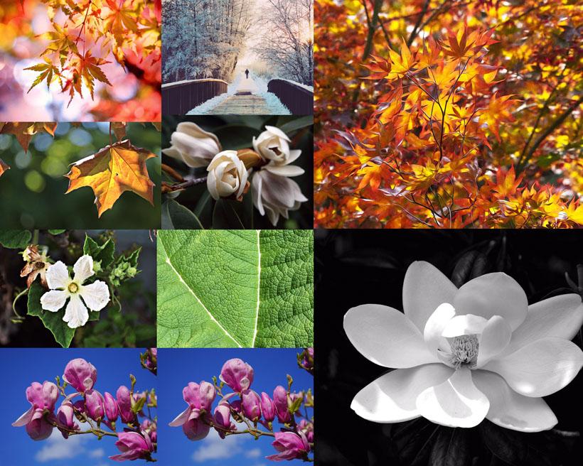 春天植物花朵拍摄高清图片