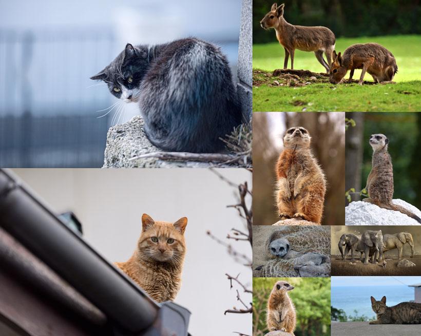 可爱小动物写真拍摄时时彩娱乐网站