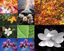 春天植物花朵拍攝高清圖片