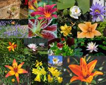 盛開的鮮花攝影高清圖片