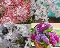 春天ξ 美��花朵拍�z高清�D片