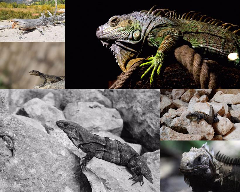 蜥蜴动物拍摄时时彩娱乐网站