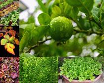 植物葉子拍攝高清圖片