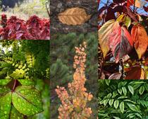色彩植物葉子攝影高清圖片
