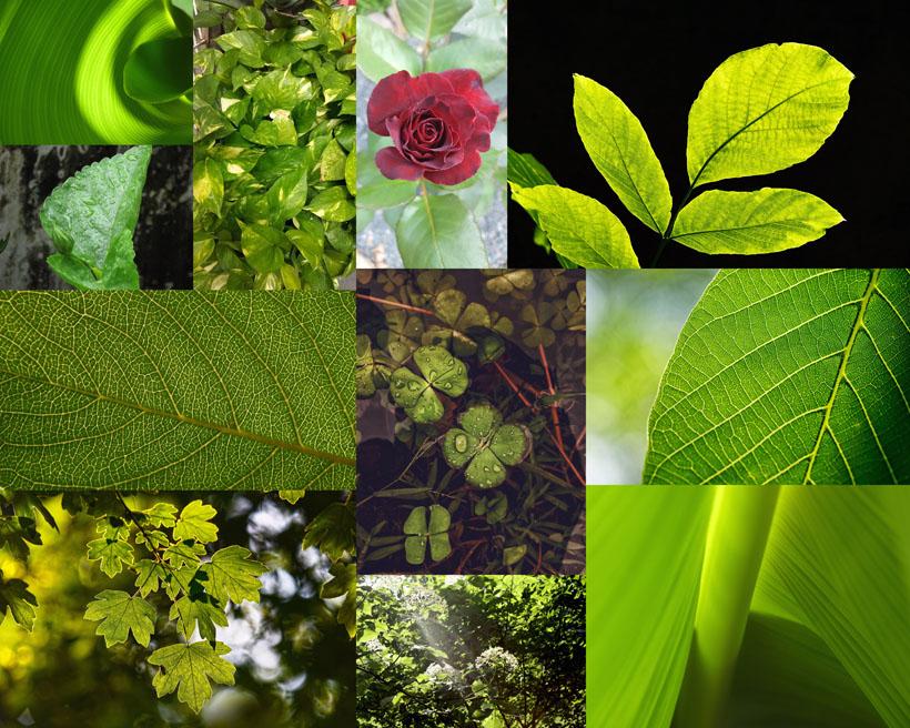 绿色叶子植物摄影高清图片