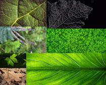 春天植物綠葉攝影高清圖片
