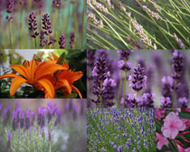 春天花朵寫真拍攝高清圖片