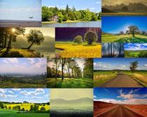 美丽的春天景观拍摄高清图片