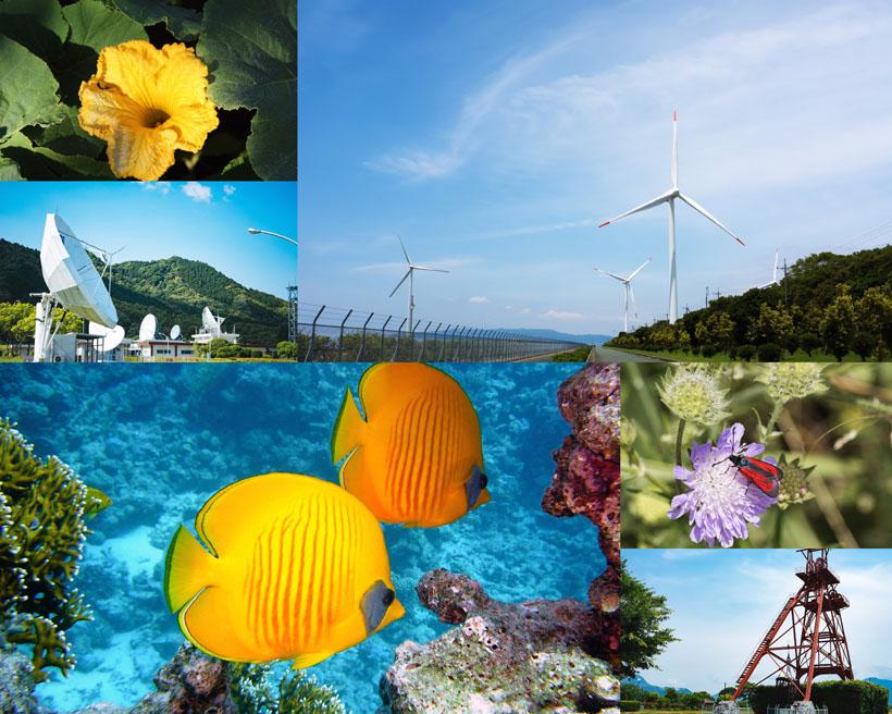 大自然花朵生物摄影高清图片