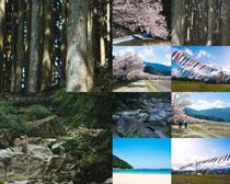 樱花树木风光摄影高清图片