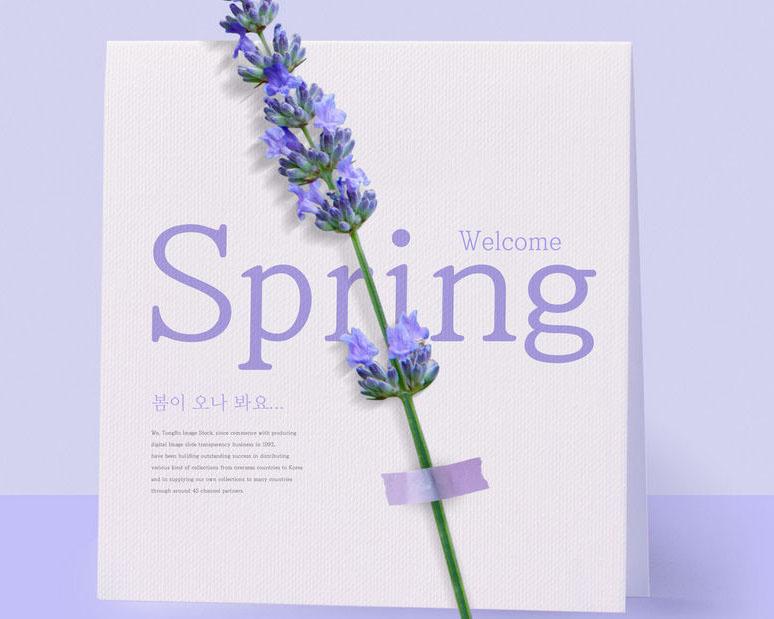花朵春天封面PSD素材