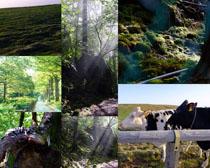 绿色树木风景摄影高清图片