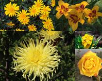 漂亮的花朵拍攝高清圖片