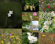 春天漂亮小花朵攝影高清圖片