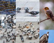 鸽子与小鸟拍摄高清图片