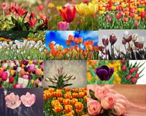 漂亮色彩盛開鮮花攝影高清圖片